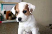 Куплю щенка